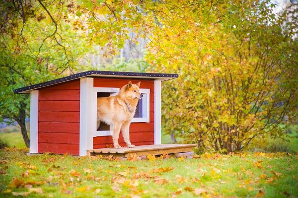 Vilperi lämpöeristetty koirankoppi